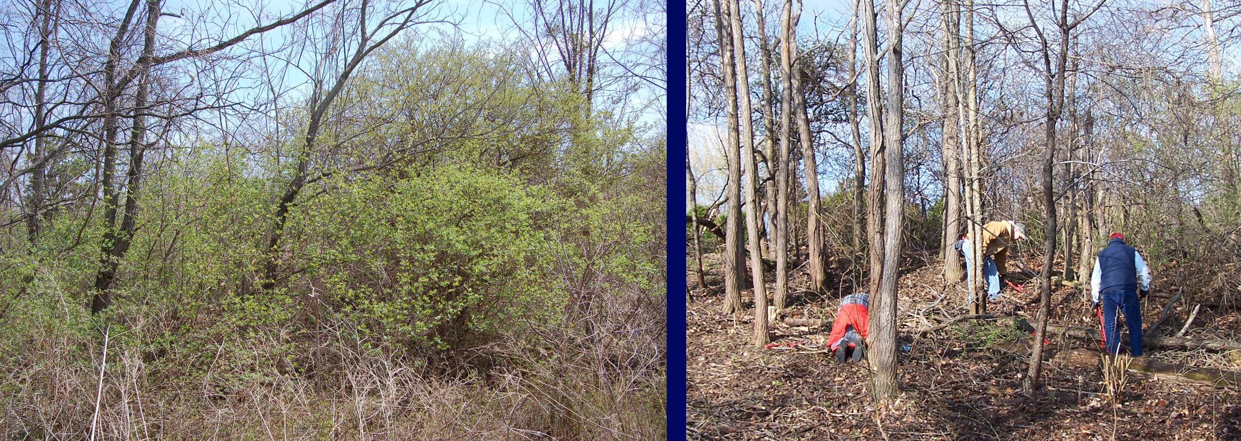 Before And After Invasive Removal