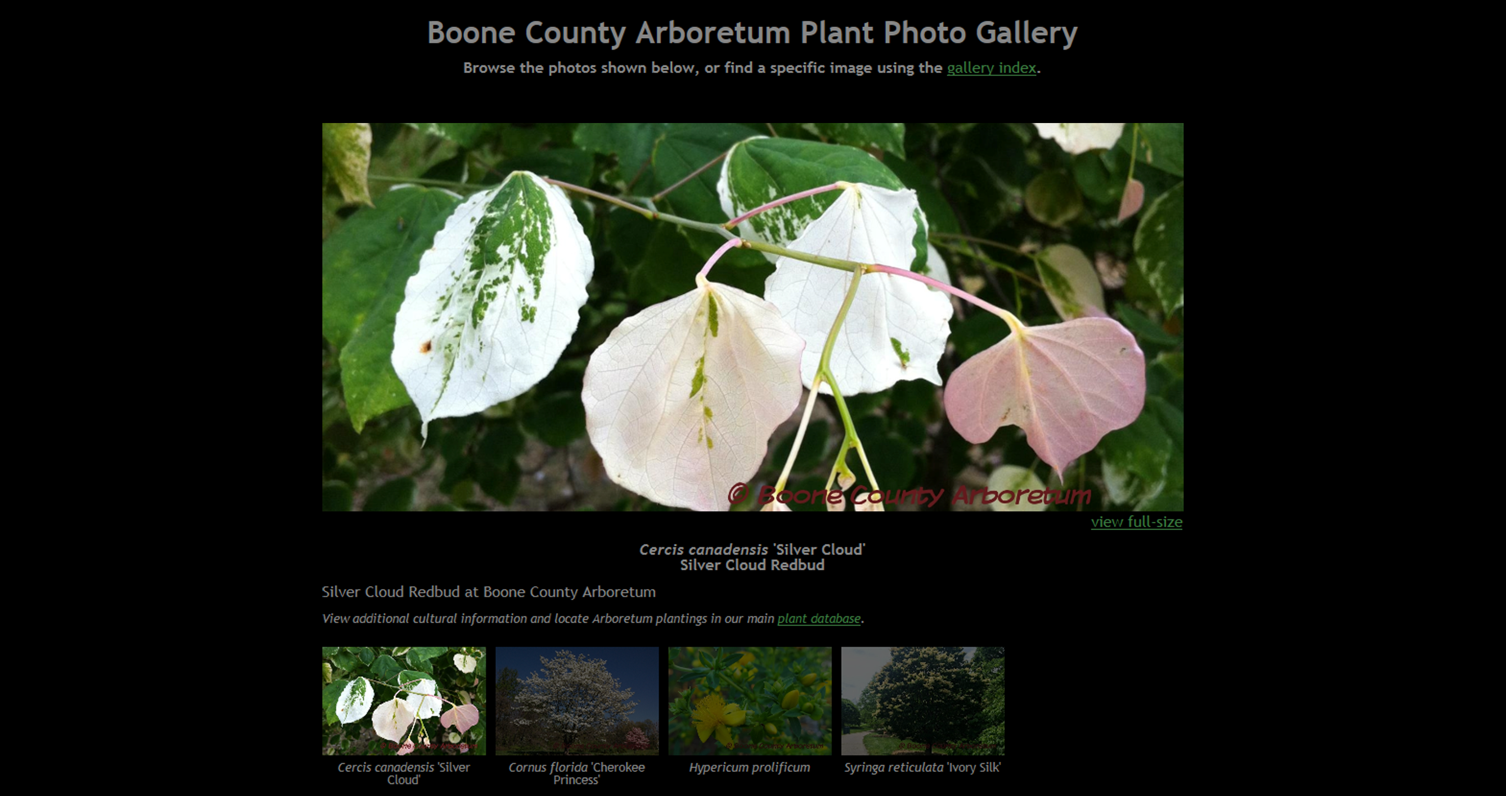 Plant Photo Gallery Preview